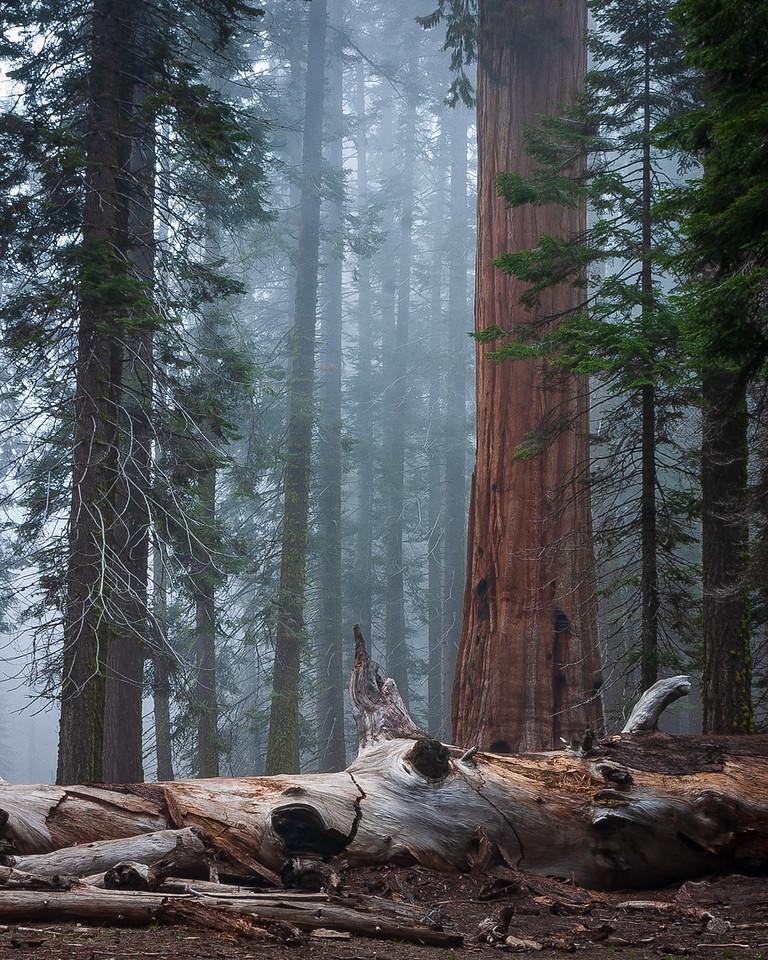 Morning Mist, Sequoia National Park