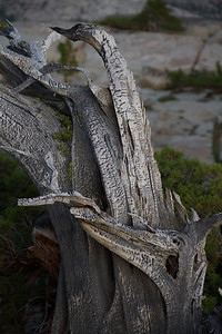 Twisted Wood