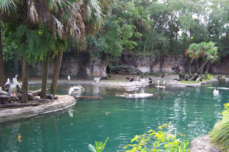 Here's the same pond, with a few Brown Pelicans added to the mix.