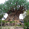 The Tree of Life in Animal Kingdom.  The entire enormous tree, including its long roots, is covered with carved animal/bird figures.