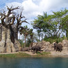 Elephants on the Kilimanjaro Safari ride