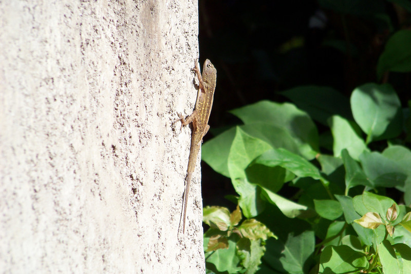 While enjoying iced coffee drinks and resting our feet, we see this little guy sunning himself.