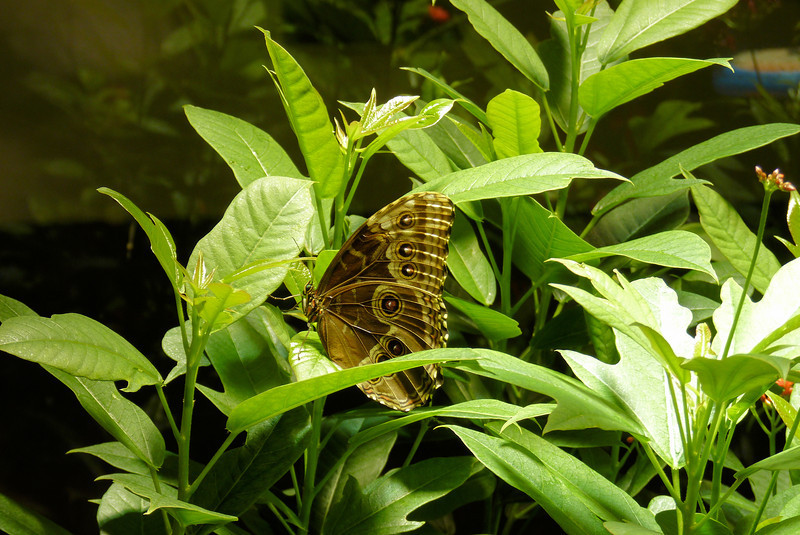 Butterflies at the Museum of Natural History
