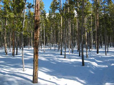 Sun Valley, January - February 2005