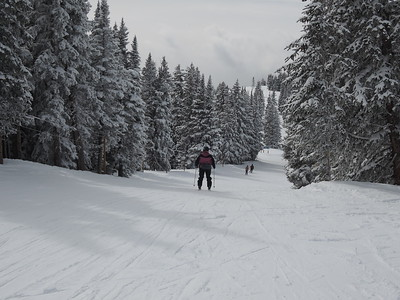 This chute of pines is one of Patti's favorite ski routes.