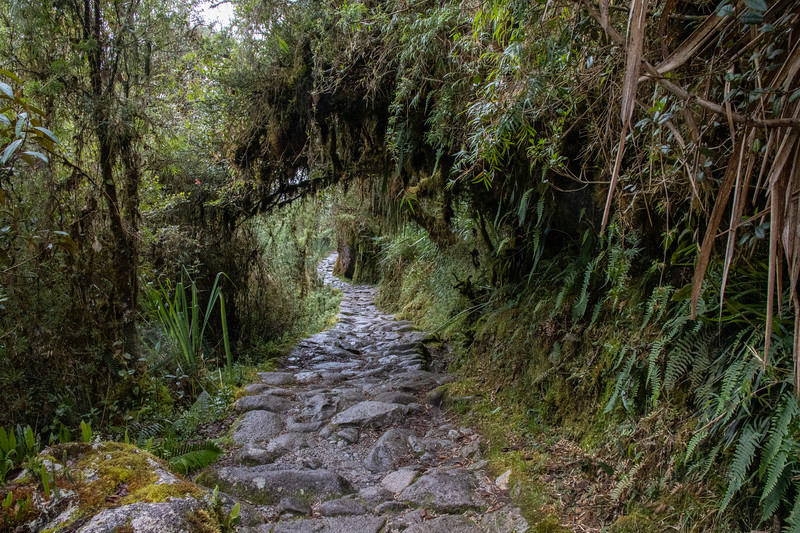 Dense foliage and original Inca Stonework in the Trail