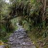 Dense foliage and original Inca Stonework in the Trail