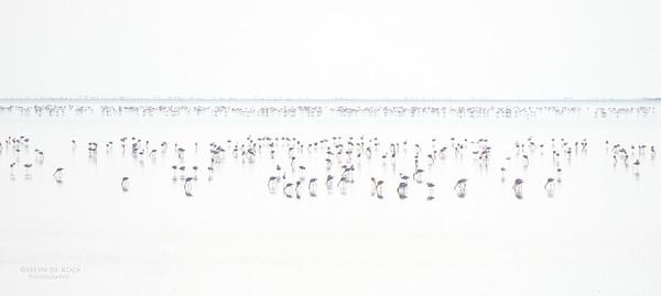 Lesser Flamingo, Etosha NP, Namibia, July 2011-1-Recovered