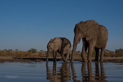 African Elephant, Mashatu GR, Botswana, May 2017-34