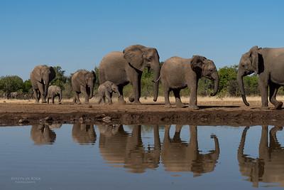 African Elephant, Mashatu GR, Botswana, May 2017-12