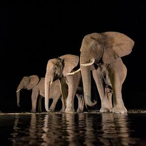African Elephant, Zimanga, South Africa, May 2017-4