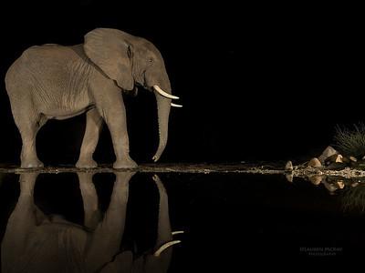 African Elephant, Zimanga, South Africa, May 2017-6
