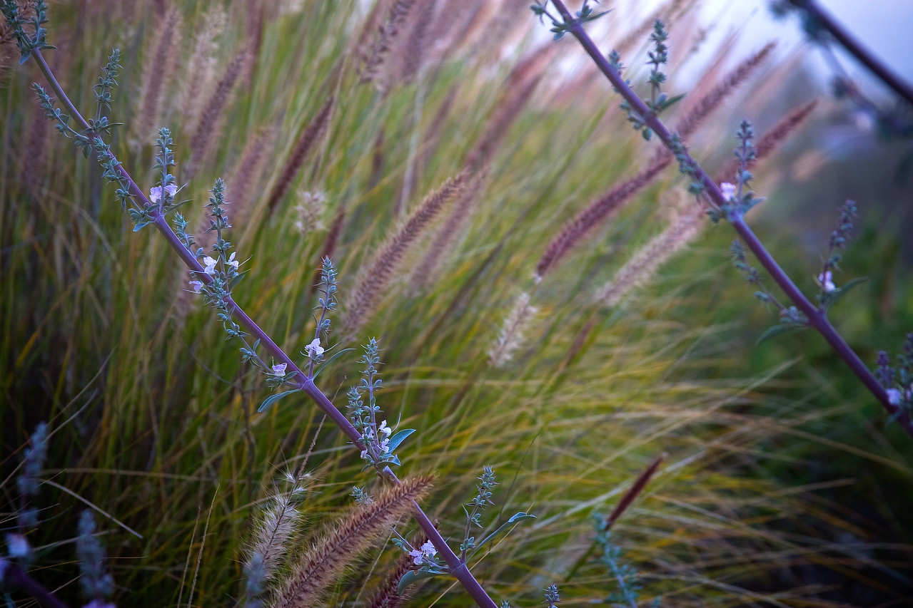 Coyote Hills Flora