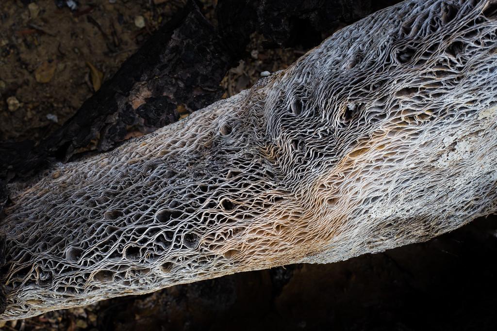 Mummified Cactus