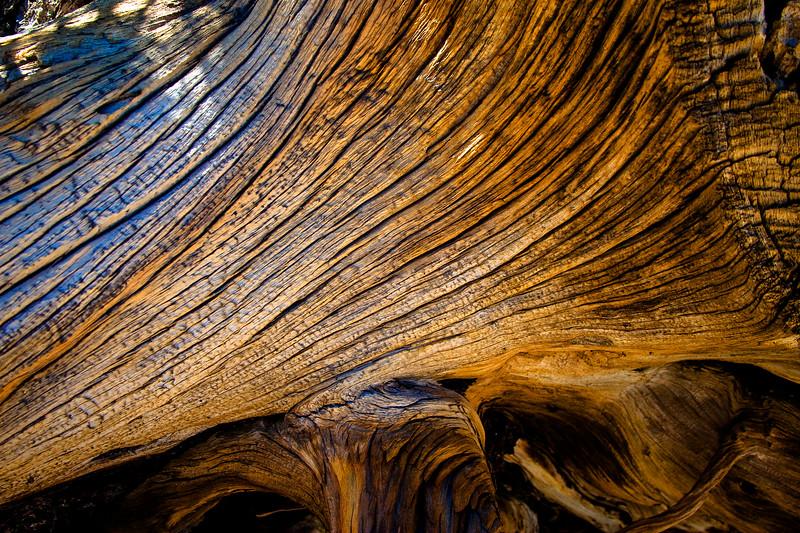 Fallen Timber Close Up