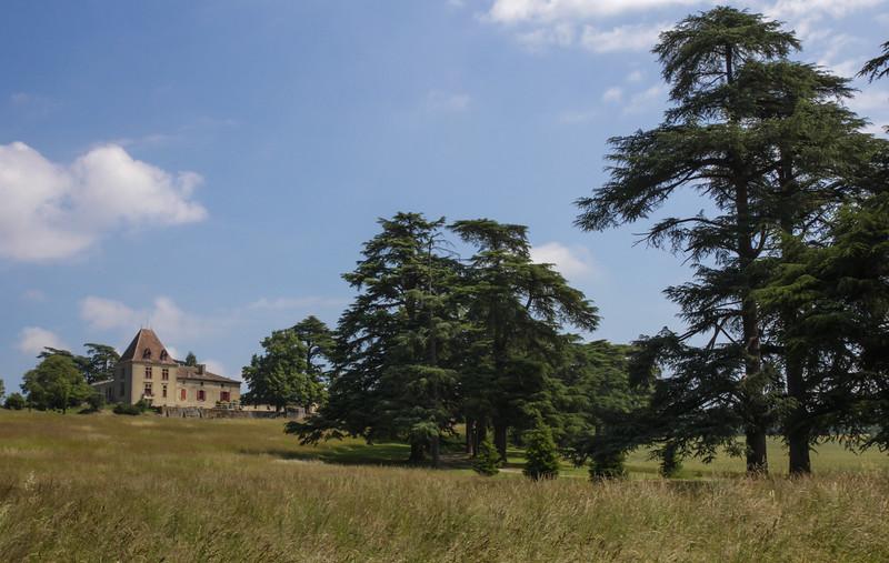 Castle with Cedrus libani