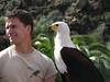 American Eagle (Palmitos Park)