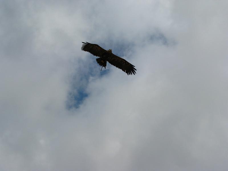 bird of prey (Palmitos Park)