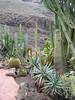Cactus garden (Palmitos Park)