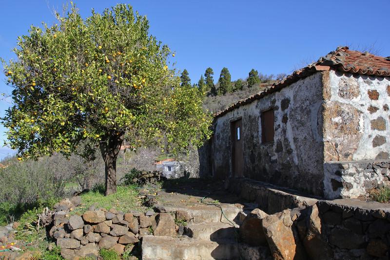 House with Citrus × sinensis, (native to SE Asia), near Tinizara, LP 1