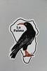 Bird of La Palma, Pyrrhocorax pyrrhocorax, Chough, (NL: Alpenkraai), Lomo de los Castros 700m, S of Franceses, LP1