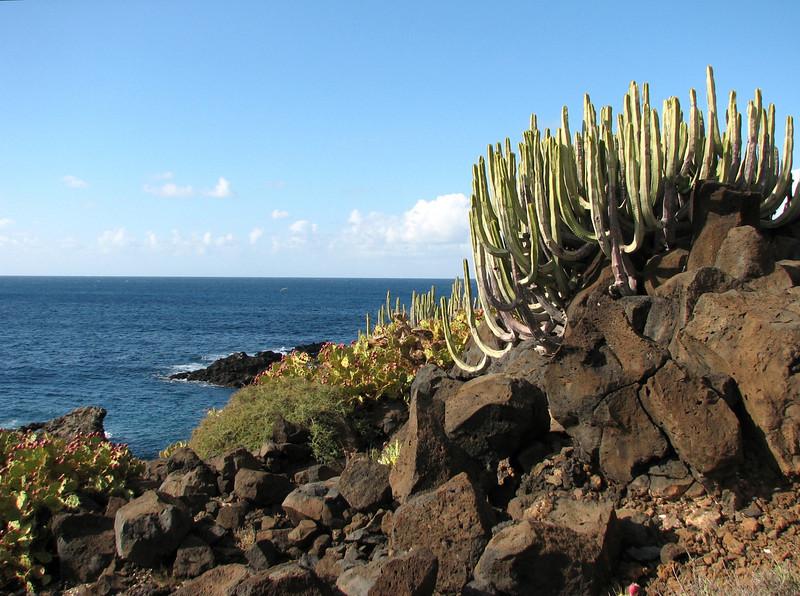 coast area (Teno, Tenerife)
