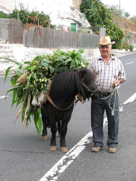 (Tenerife)