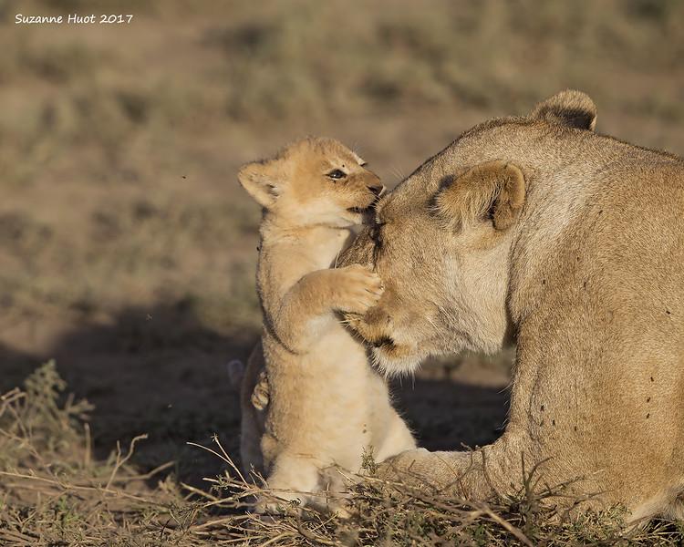 Cassandra with cub