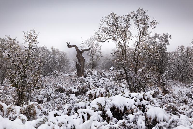Fresh Fallen Snow, Tehachapi