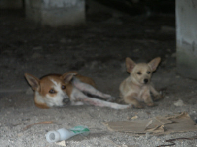 Cats, Dogs and Other Thai Animals