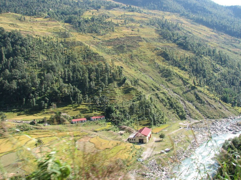 rice fields (Nepal)