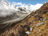 Lhotse en Mount Everest (habitat of gentians)