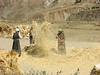 barley ( gerst ) (Lhasa - Gyangtse)