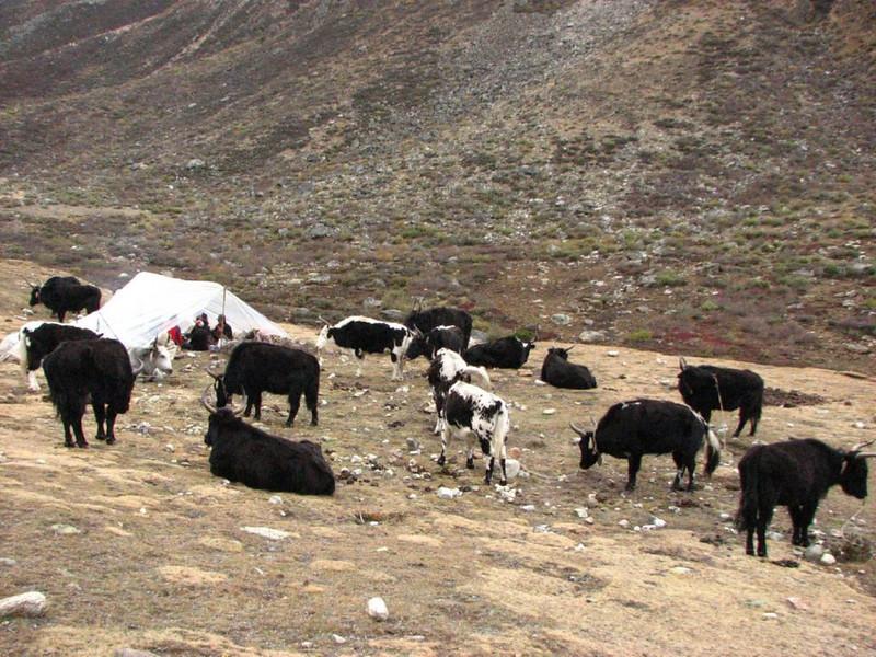 9/10 okt.  Kamp 2  Shao-La base camp  4253m. (Kangchungtrek)