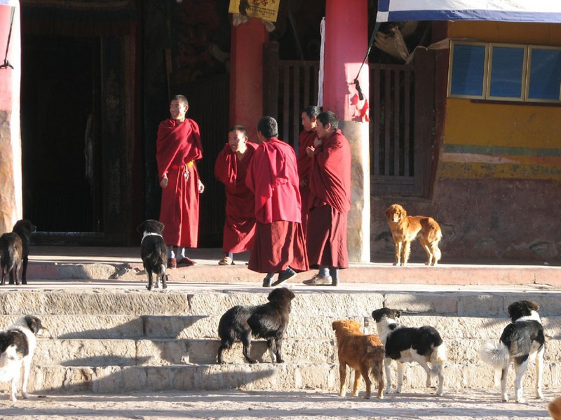 monks and dogs, Tashihunpo monastery (Shigatse)