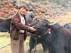 yak herdsman (Kangchungtrek)