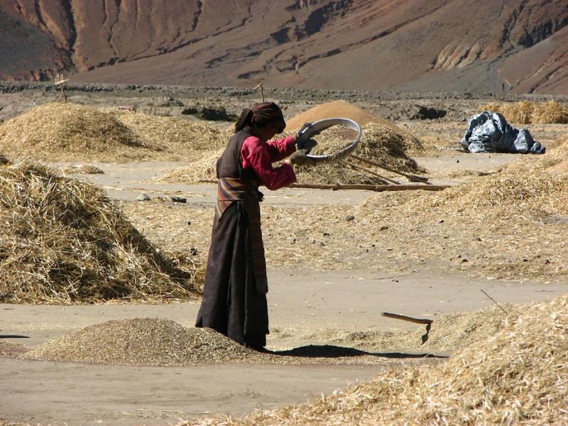sieve the grain (Shigatse)