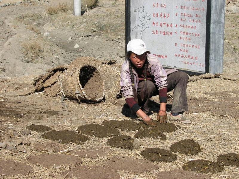 drying manure (Lhasa - Gyangtse)