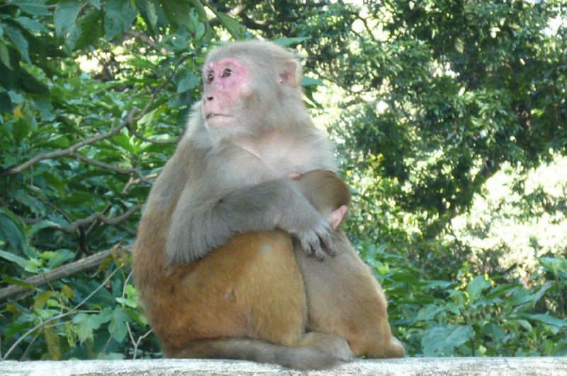 monkey temple (Swoyambhunath)