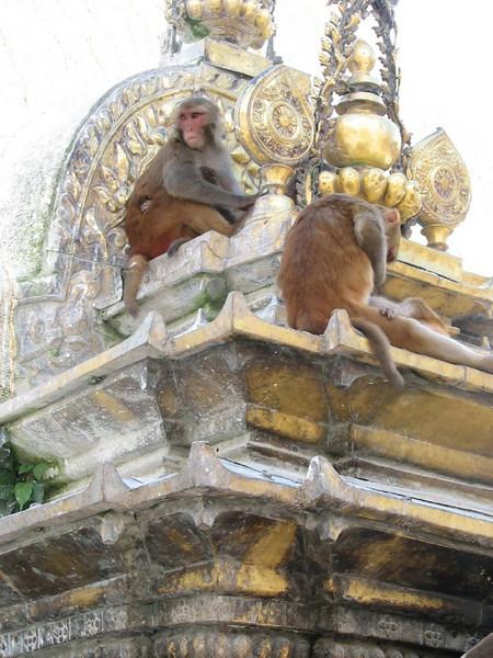 monkey temple (Swoyambhunath)
