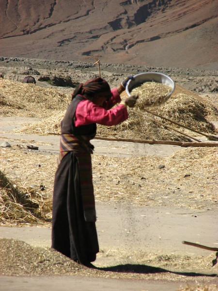 sieve the barley (Shigatse)