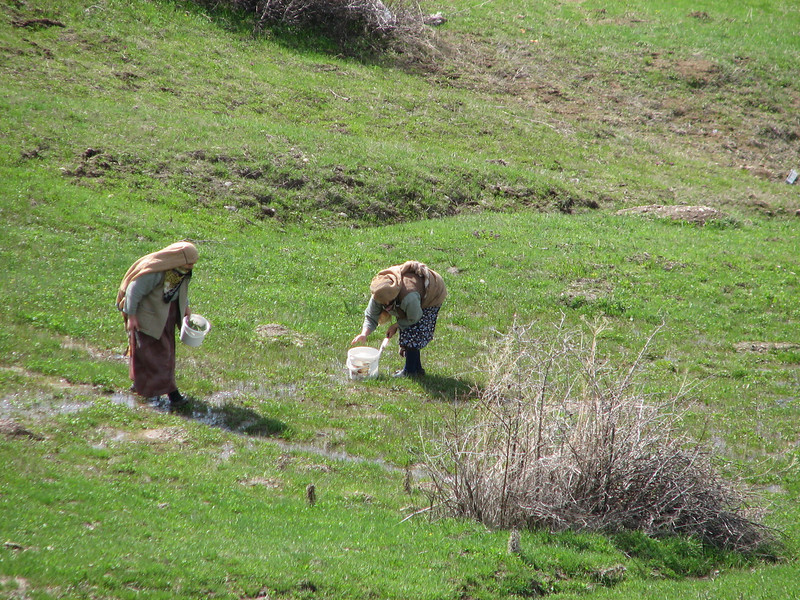 surching for edible plants (North East Turkey spring 2007)