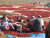 drying red peppers near Islahiye (Hassa - Gazi Antep)