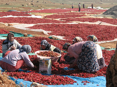 Turkey, South Anatolia, 2008