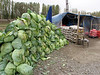 Cabbage for sale, along the road Tercan-Askale