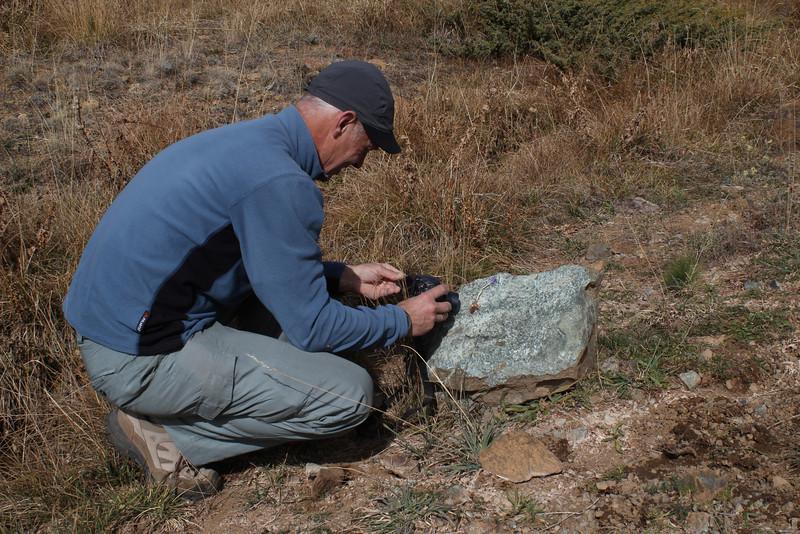 Identification of Crocus kotschyanus ssp. suworianus, Yeniköy 2400m before Sakaltutan Gecidi [5]  (bulb only for determination purposes)