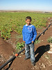 Kurdish boy with school uniform in pepperfield,   Diyarbakir - Siverek - Karacadag