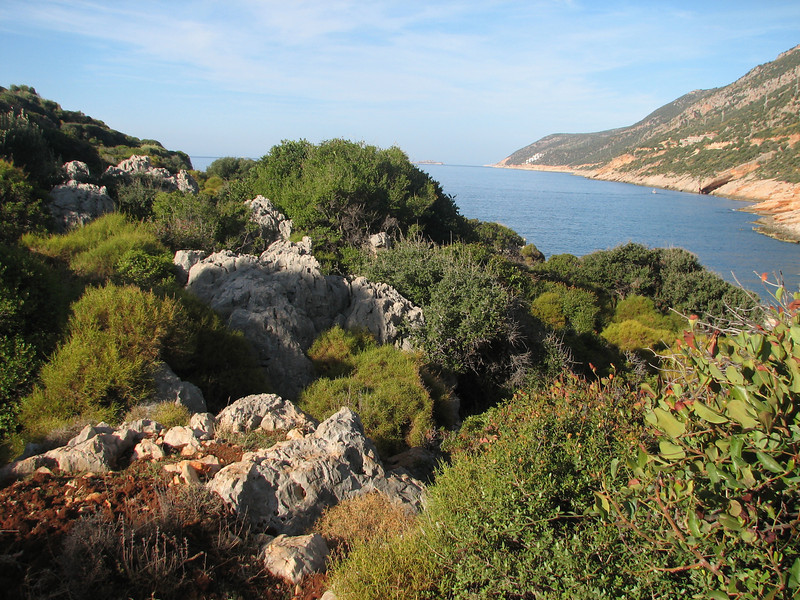 Colchicum stevenii near the coast SW Turkey