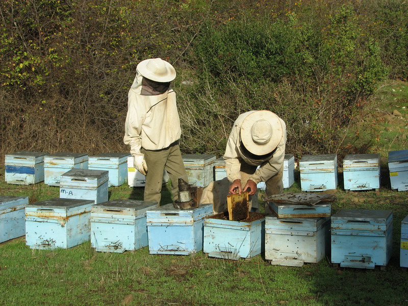 Beehives and beekeepers (A few km past junction to Bozborun on the Marmaris - Datça road)