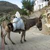 Donkey (Datça Peninsula)